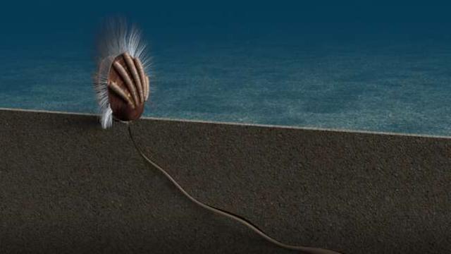 Bằng chứng hóa thạch về mối quan hệ ký sinh  – vật chủ - 1