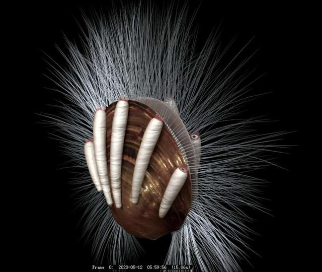 Bằng chứng hóa thạch về mối quan hệ ký sinh  – vật chủ - 3