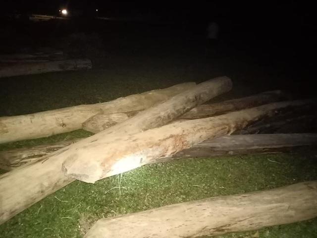 Truy tìm nguồn gốc hàng chục khúc gỗ tập kết tại nghĩa trang - 1