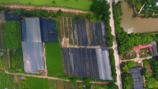 Về thủ phủ trồng hoa gần Hà Nội, người dân lái xe sang đi thăm vườn - 2