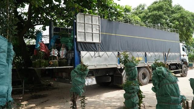 Về thủ phủ trồng hoa gần Hà Nội, người dân lái xe sang đi thăm vườn - 4