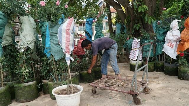 Về thủ phủ trồng hoa gần Hà Nội, người dân lái xe sang đi thăm vườn - 5
