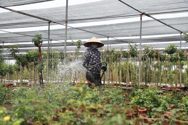 Về thủ phủ trồng hoa gần Hà Nội, người dân lái xe sang đi thăm vườn - 6