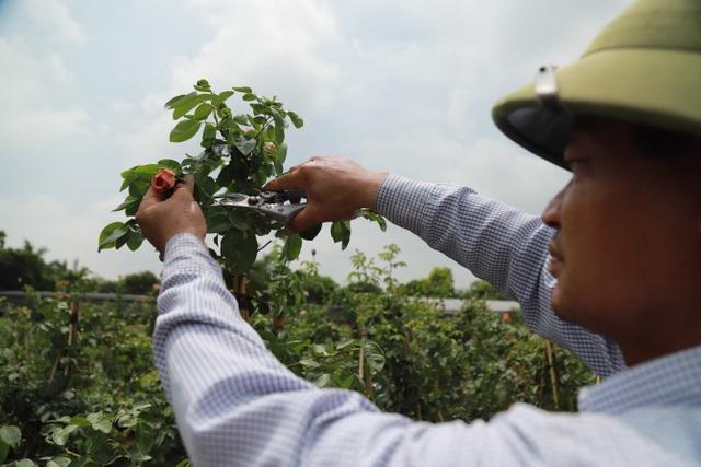 Về thủ phủ trồng hoa gần Hà Nội, người dân lái xe sang đi thăm vườn - 8