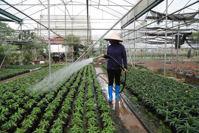 Về thủ phủ trồng hoa gần Hà Nội, người dân lái xe sang đi thăm vườn - 10
