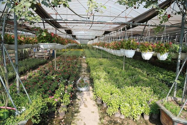 Về thủ phủ trồng hoa gần Hà Nội, người dân lái xe sang đi thăm vườn - 12