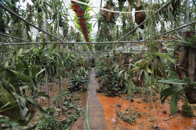 Về thủ phủ trồng hoa gần Hà Nội, người dân lái xe sang đi thăm vườn - 15