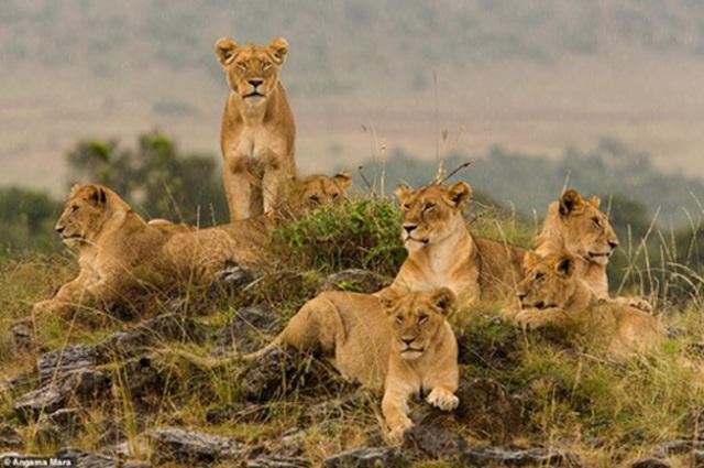 Đến Kenya chiêm ngưỡng những vẻ đẹp độc đáo có một không hai - 10