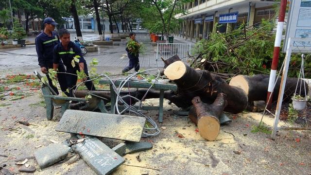Sau cơn mưa lớn, một cây phượng bị bật gốc trong sân trường - 2