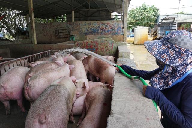 Nhập cả triệu con lợn sống, giá thịt lợn siêu thị vẫn tăng mạnh - 1