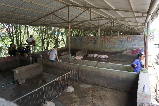 Chợ đầu mối lợn hơi ế ẩm, tiểu thương ngồi đuổi ruồi vì giá quá cao - 8