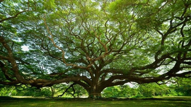 """Các khu rừng trên khắp Trái đất đang ngày càng """"trẻ hoá"""" - 1"""