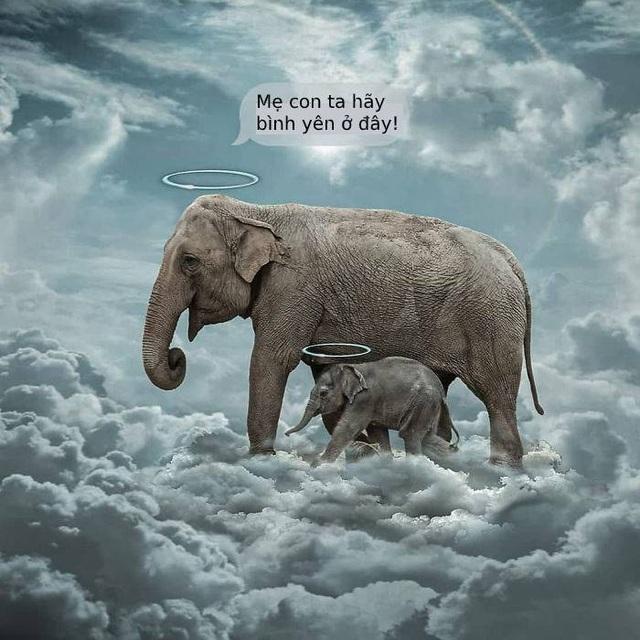 Cộng đồng mạng quốc tế xót xa trước bộ tranh kể về bi kịch của voi mẹ - 25