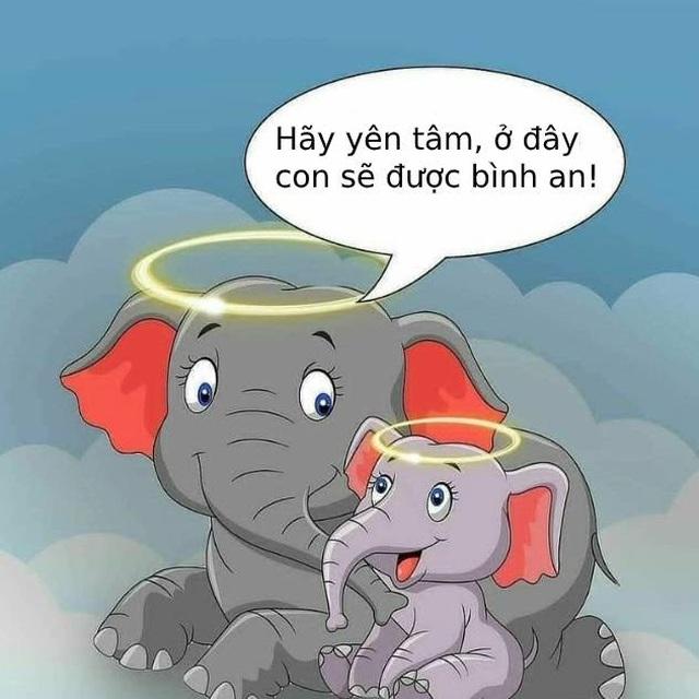 Cộng đồng mạng quốc tế xót xa trước bộ tranh kể về bi kịch của voi mẹ - 8