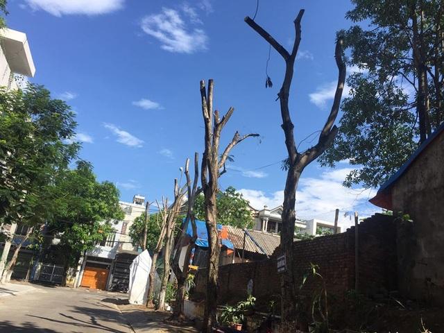 Hàng chục cây xanh quanh trường học bị cắt cụt ngọn - 2