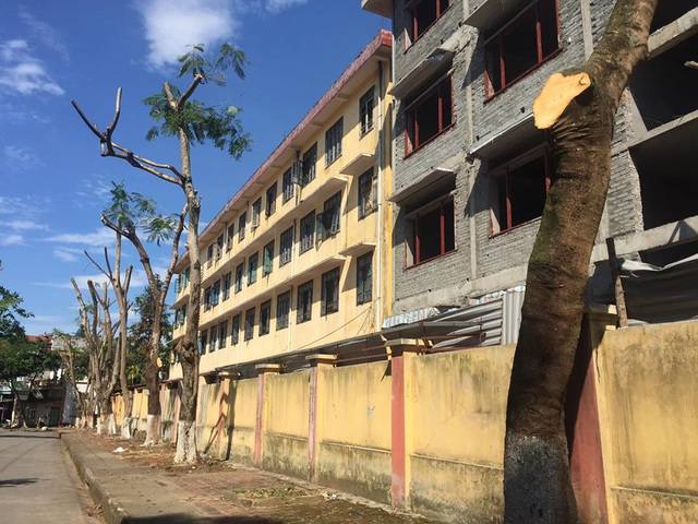 Hàng chục cây xanh quanh trường học bị cắt cụt ngọn - 1