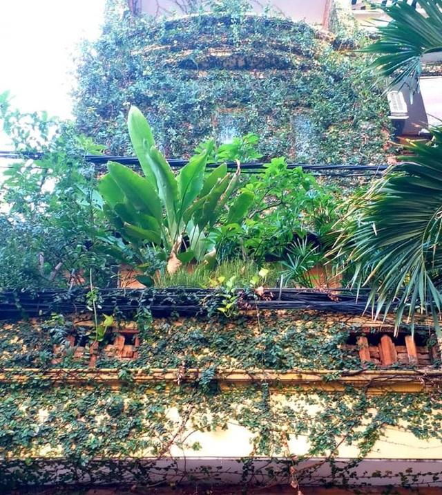 Vườn cây, ao cá đẹp mê trên sân thượng tầng 4 của ông chủ quán phở Sài Gòn - 2