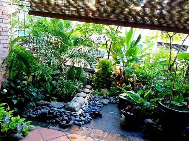 Vườn cây, ao cá đẹp mê trên sân thượng tầng 4 của ông chủ quán phở Sài Gòn - 3