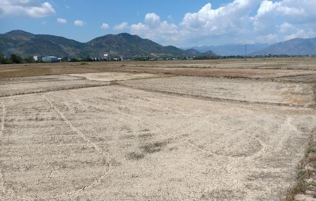 Khánh Hòa hỗ trợ gạo cứu đói cho hơn 85.000 người do hạn hán - 1