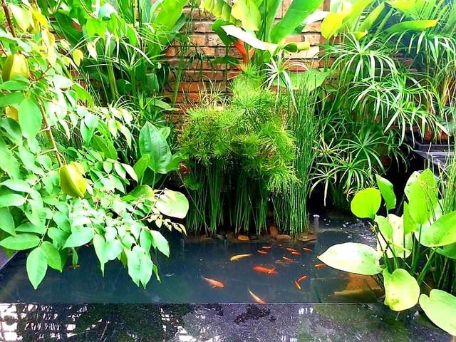 Vườn cây, ao cá đẹp mê trên sân thượng tầng 4 của ông chủ quán phở Sài Gòn - 11