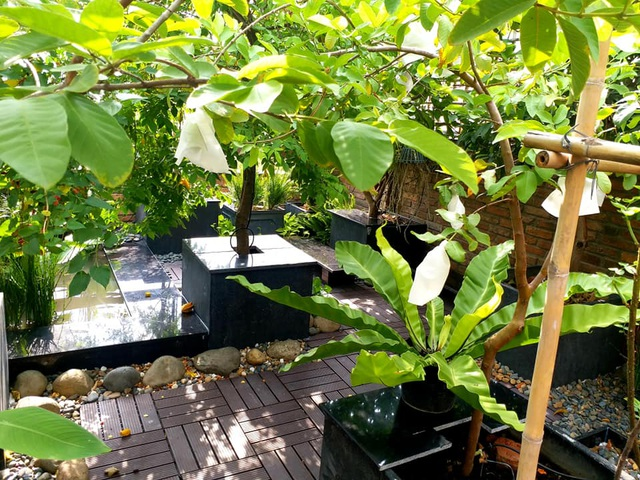 Vườn cây, ao cá đẹp mê trên sân thượng tầng 4 của ông chủ quán phở Sài Gòn - 6