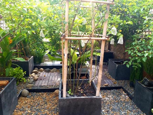 Vườn cây, ao cá đẹp mê trên sân thượng tầng 4 của ông chủ quán phở Sài Gòn - 5