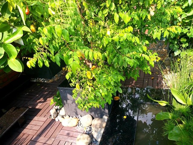 Vườn cây, ao cá đẹp mê trên sân thượng tầng 4 của ông chủ quán phở Sài Gòn - 7