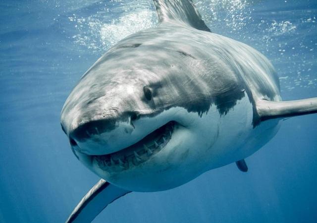 Đang mải lặn ngắm san hô, du khách bị cá mập cắn hụt - 2