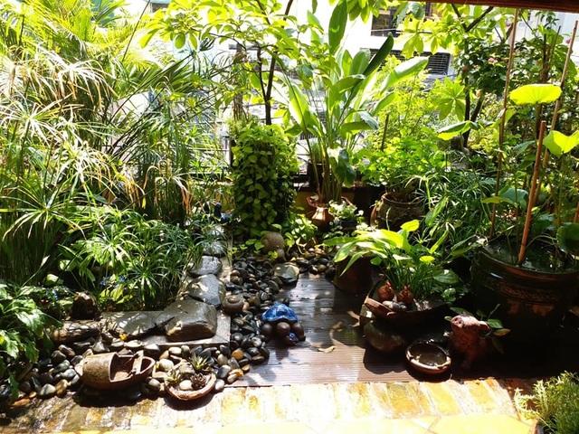 Vườn cây, ao cá đẹp mê trên sân thượng tầng 4 của ông chủ quán phở Sài Gòn - 12