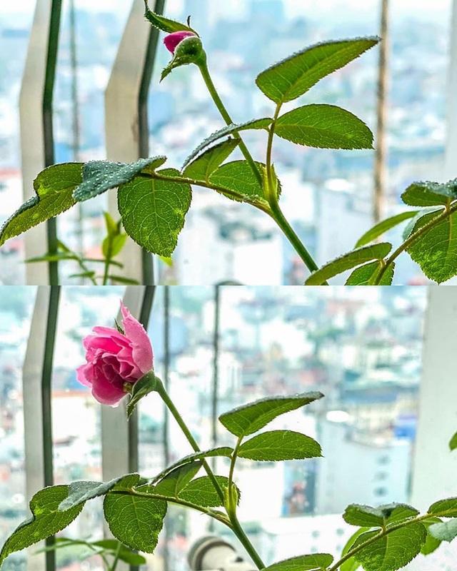Mê mẩn khu vườn ngập tràn hoa lá của Khánh Thi, Duy Nam, Mai Ngọc - 23