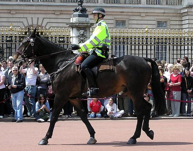 Các đội cảnh sát kỵ binh trên thế giới - 4