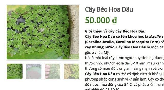 Ở quê bỏ đi lợn cũng không ăn, lên mạng bán 50 ngàn đồng/cây - 3