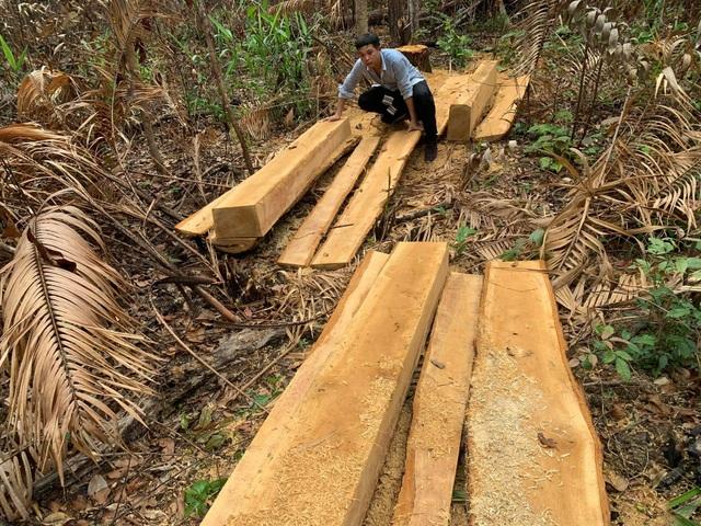 Chỉ đạo nóng vụ dân đốt sạch, lâm tặc xẻ thịt rừng xanh Tây Nguyên - 1