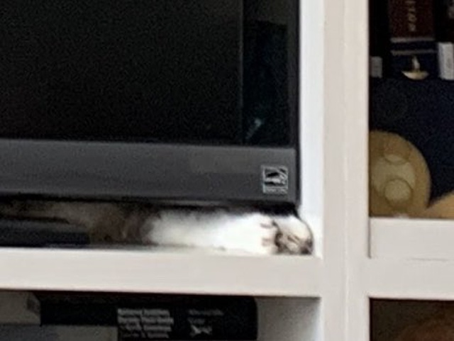 """Bức ảnh """"Con mèo ở đâu"""" gây bão mạng - 2"""