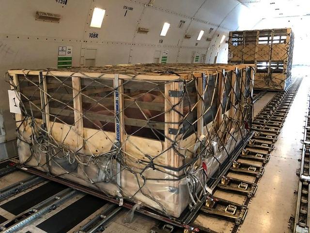 Mô hình kinh doanh hàng không mới nổi: Vận chuyển lợn giống đến Trung Quốc - 1