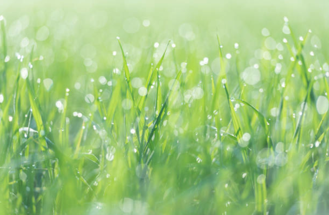 Những mùa nắng hạ | Báo Dân trí