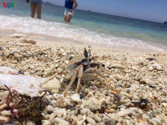 Khám phá đảo Lý Sơn - thiên đường biển xanh của Quảng Ngãi - 19