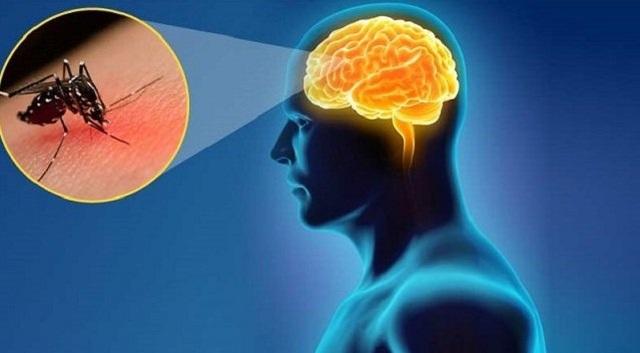 Dấu hiệu phát hiện sớm viêm não Nhật Bản để hạn chế tối đa di chứng cho trẻ - 1
