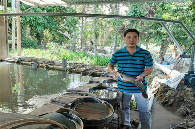 Nuôi cá thát lát cườm đặc sản thành công, một nông dân thu 1,5 tỷ đồng mỗi năm - 1