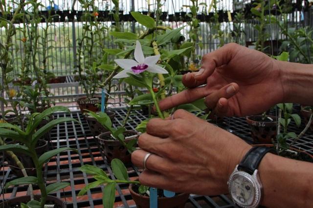 Gặp người  mua 3 cây lan đột biến gene giá 32 tỷ đồng ở Bình Phước - 5