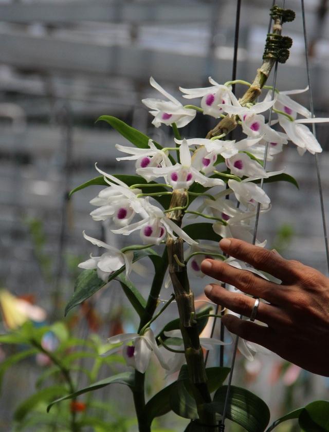 Gặp người  mua 3 cây lan đột biến gene giá 32 tỷ đồng ở Bình Phước - 6