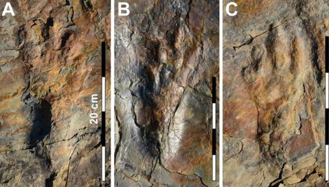 Cá sấu khổng lồ cổ đại đi bằng 2 chân - 2