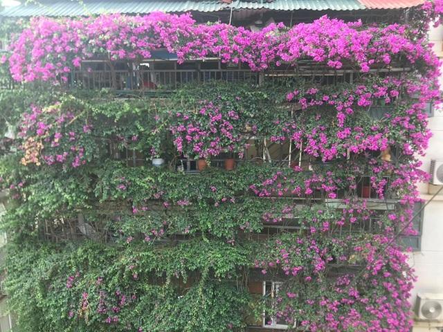 Những ngôi nhà phủ cây xanh, mỗi buổi sáng chim hót líu lo như trong rừng - 8