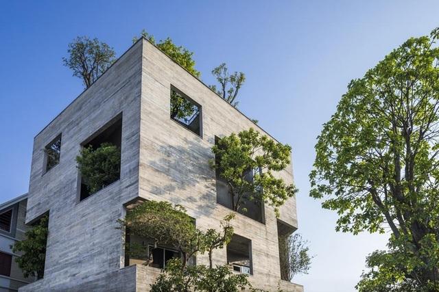 Những ngôi nhà phủ cây xanh, mỗi buổi sáng chim hót líu lo như trong rừng - 11