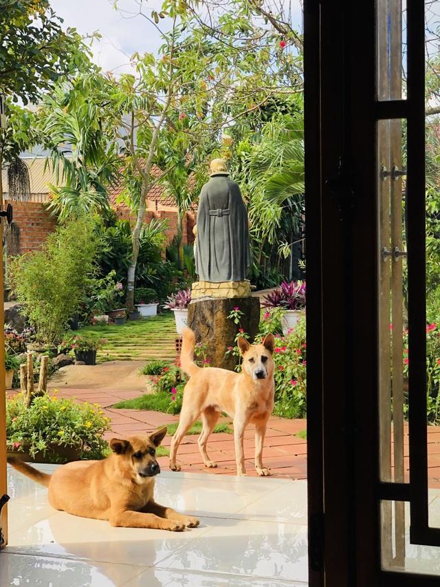 Nhà vườn 390 triệu đồng của con trai xây tặng mẹ dưỡng già ở Đắk Nông - 9