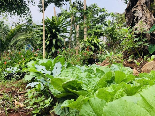 Nhà vườn 390 triệu đồng của con trai xây tặng mẹ dưỡng già ở Đắk Nông - 6