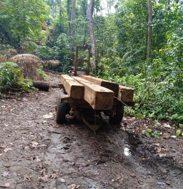 Vận chuyển gỗ từ rừng nguyên sinh, nhóm lâm tặc bị bắt tại trận - 3