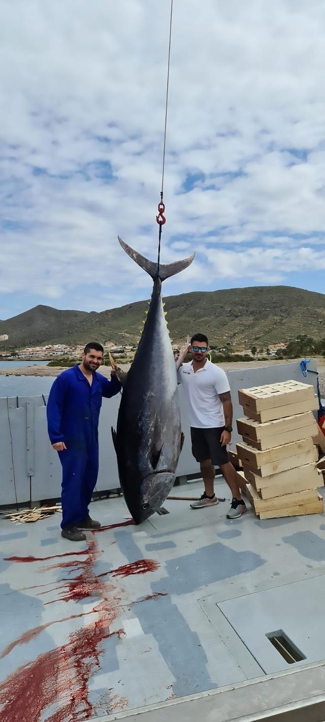 Bắt được cá trắm khổng lồ nặng hơn 50kg to bằng người trưởng thành - 2