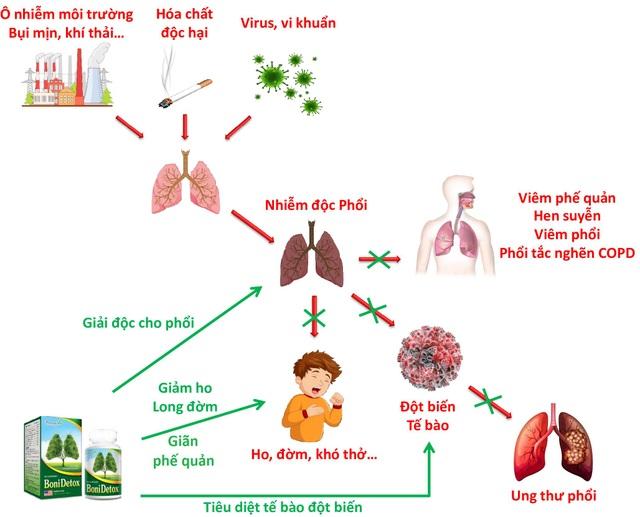 BoniDetox – Bí kíp vàng hỗ trợ giải độc phổi và giảm nguy cơ u bướu phổi của Mỹ - 3