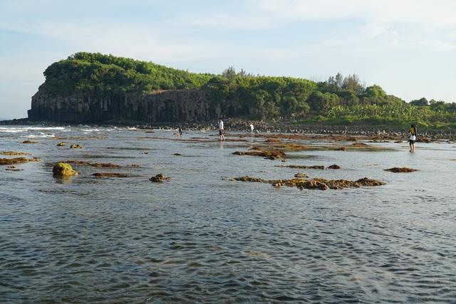 Quảng Ngãi: Khám phá rặng san hô tuyệt đẹp ở gành Yến - 3